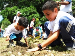 children mision arbol