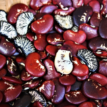 Cow striped chivata beans