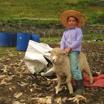 The child of a rural producer, with red cheeks typical of children in the elevated paramo, plays with one of the family's sheep (Mason London).