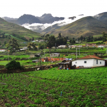 The home of a campesino family in the Venezuelan paramo with potatoes growing alongside their residence (Mason London).