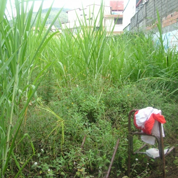 A member of the community who had a piece of land that he currently isn't able to use, lent it to the community in July this year. It hadn't been used in a while and was full of long grass, we couldn't even see the back wall!