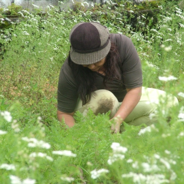 A neighbour weeding the carrots, with the coriander flowers in the foreground.