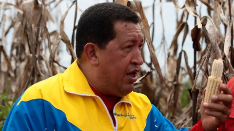 President Chavez visits a corn field on Sunday (Prensa Presidencial)