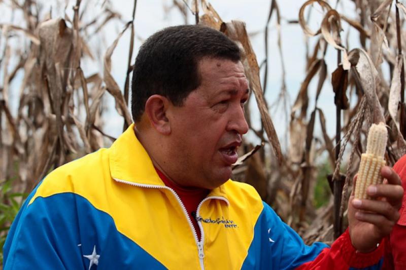 President Chavez visits a corn field on Sunday (Prensa Presidencial)