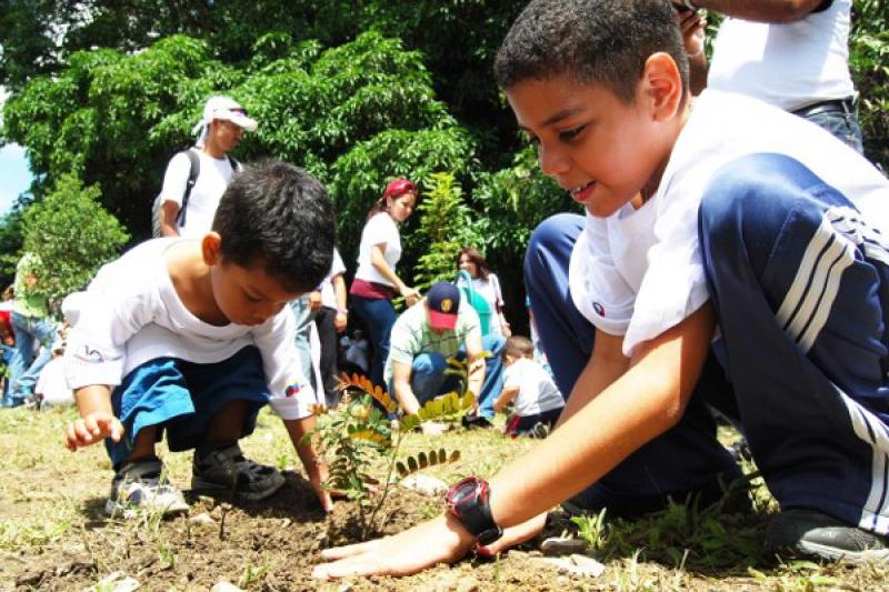 children mision arbol
