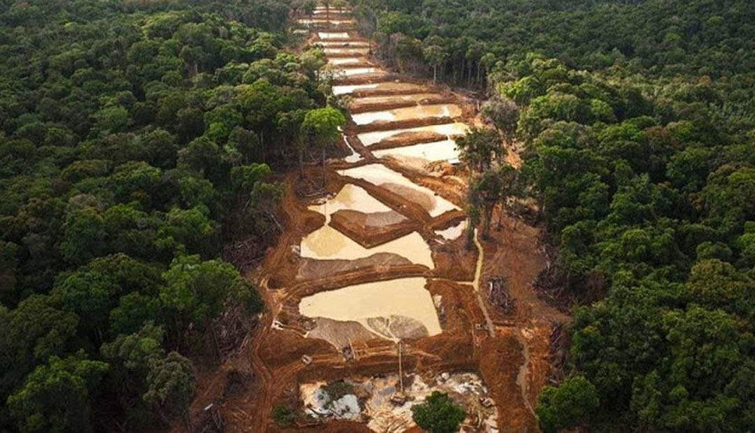 To extract gold, pools of water are created. These pools are then abandoned and become breeding sites for mosquitos