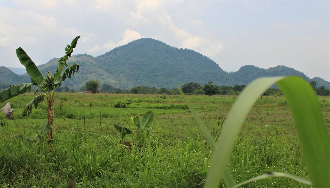 Mining explorations in Cerro la Vieja could endanger agrarian production in the Venezuelan llanos (Katrina Kozarek).