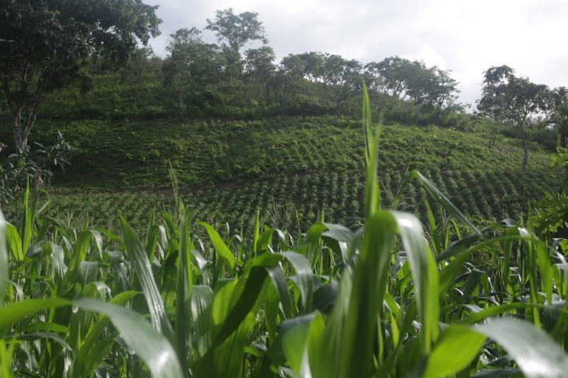 Lara State is home to some of the most fertile lands in Venezuela (Seguei Alvarado).