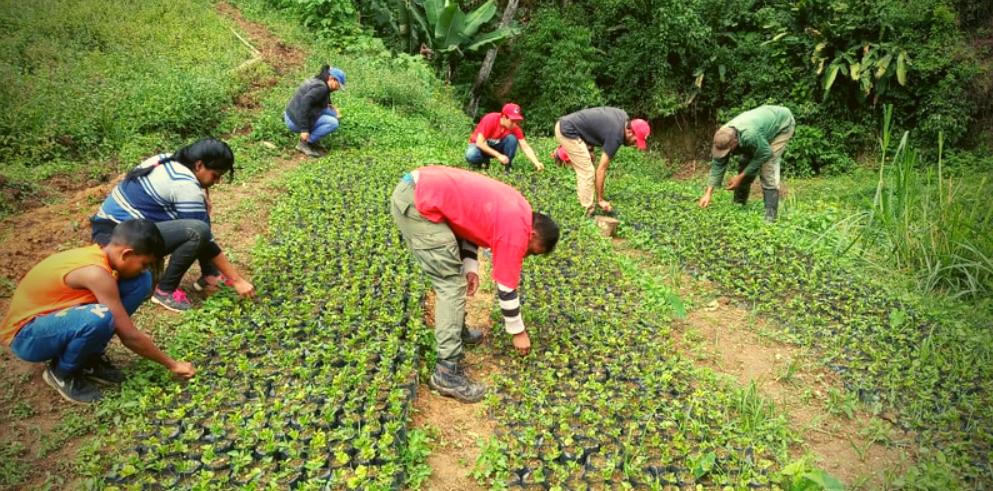 Voluntary work by the Argelia Laya Brigade, Miranda state. (Carlos Rodríguez/Unión Comunera)