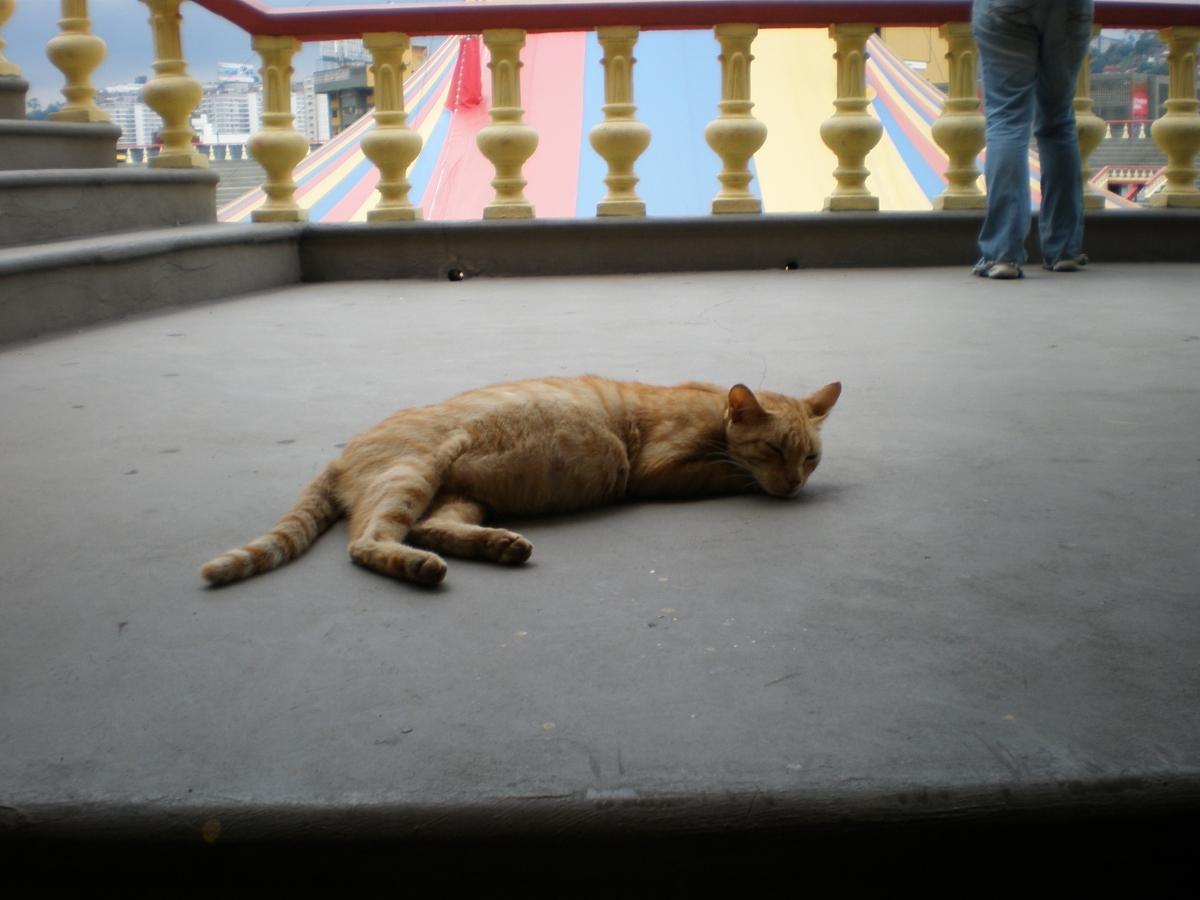 Circus cat (Stuart Roberston)