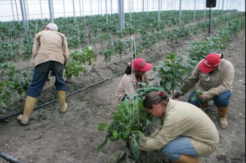 Farm workers on the Paula Correa Social Production Unit (MINCI)