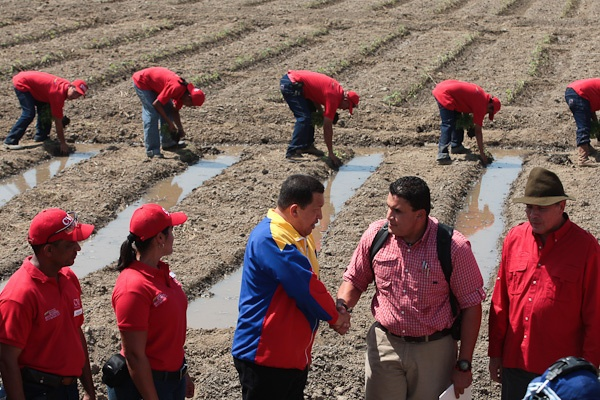 Venezuelan President Hugo Chávez during a visit to worker-controlled agricultural lands as he announced the 'Law of Attention for the Agricultural Sector' and 'Mission Agro-Venezuela' (Prensa Presidencial, Miguel Ángel Angulo).
