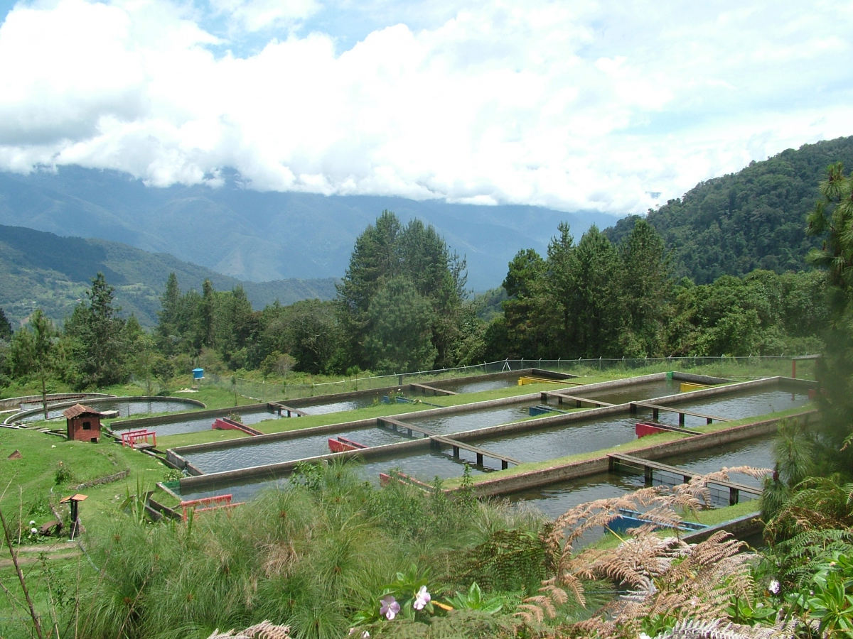 Trout farming is one of the most important economic activities in Merida (Tamara Pearson)