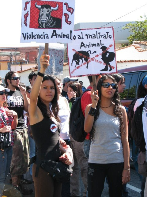 """No to the mistreatment of animals"" (Merida sin Corridas)"