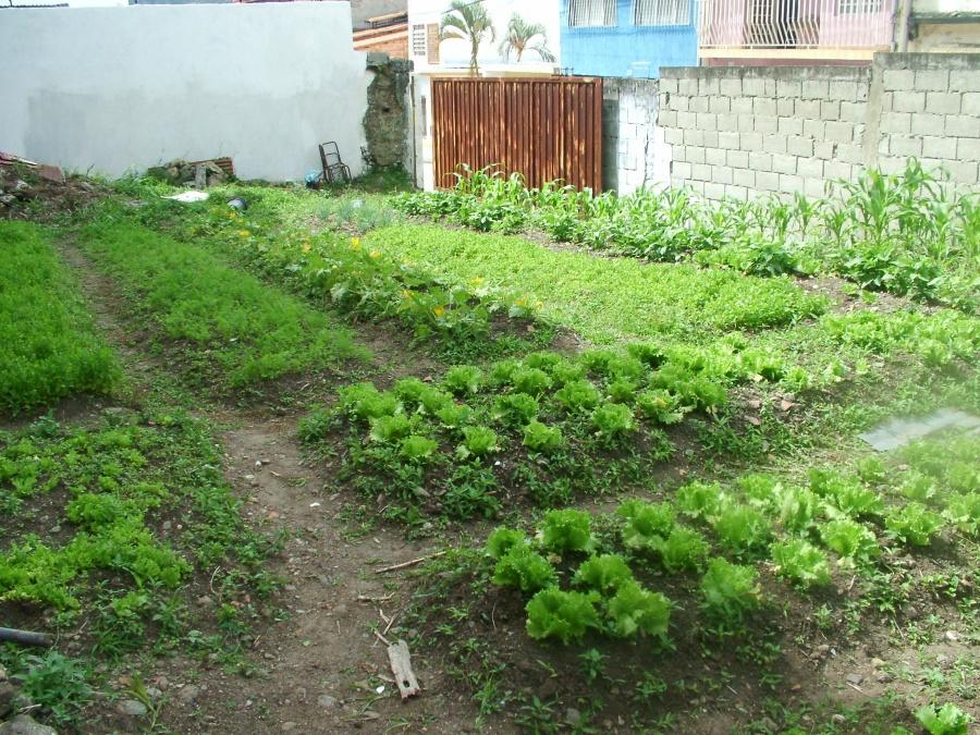Urban agriculture in Merida (Tamara Pearson/Venezuelanalysis)