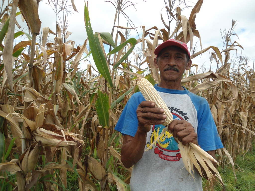 Manuel Leon sows corn from his five hectare farm in Apure. He received a government credit for three hectares of the planting. (Prensa Fondas)
