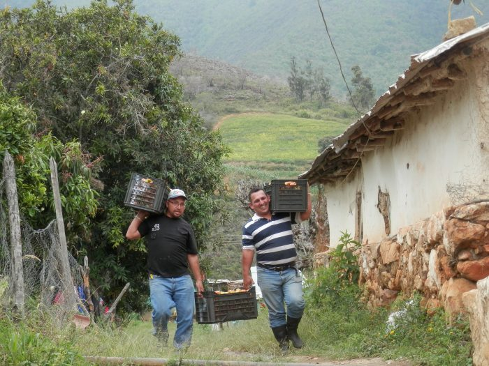 Members of a Venezuelan commune carrying produce. (Christina Schiavoni)