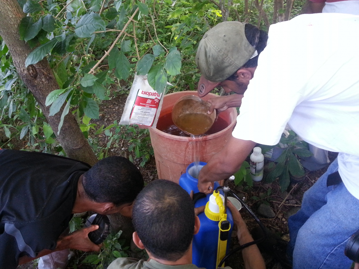 Before cleaning the corn field, participants learned how to make natural ingredient based pesticide. (Venezuela Analysis/Jeanette Charles)