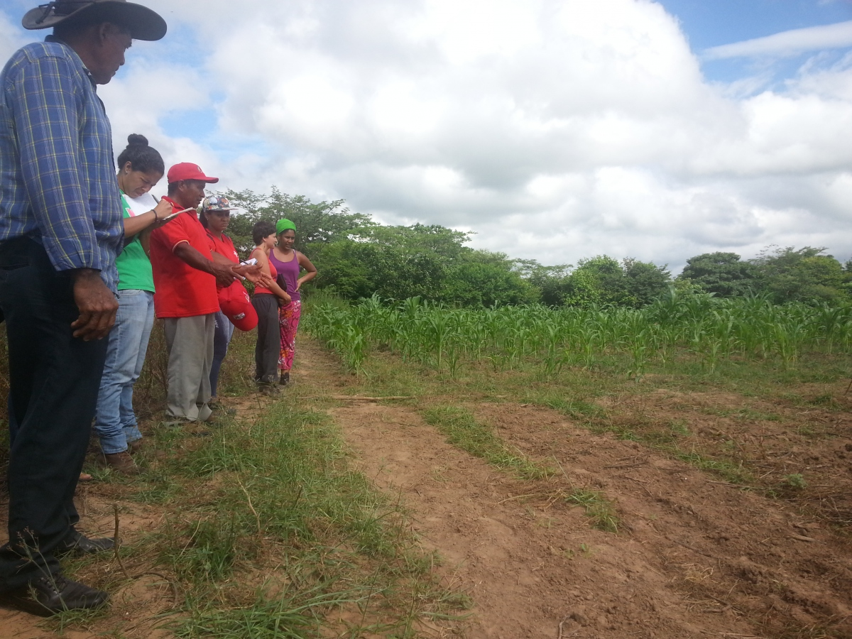 Guanape community members, workshop participants and representatives of the Ministry of Popular Power for Urban Agriculture conduct a walk through of the fields to discuss technical support necessary to carry out the program and to accompany long-term farming with the community.  (Venezuela Analysis/Jeanette Charles)