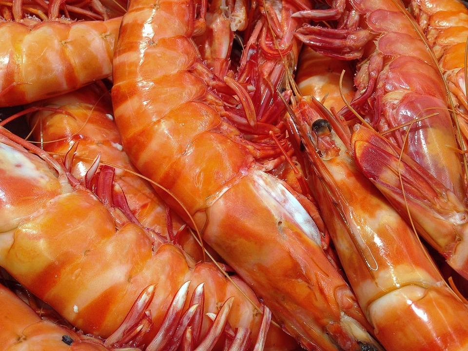 Shrimp (Archive: Pixabay)