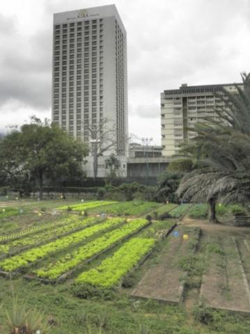 Construction site as a vegetable farm cooperative