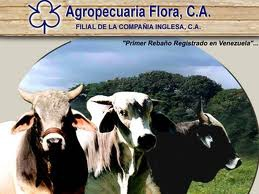 Venezuelan president Hugo Chávez announced that the British bovine company Agroflora will be expropriated with immediate effect (terra.com.ve)