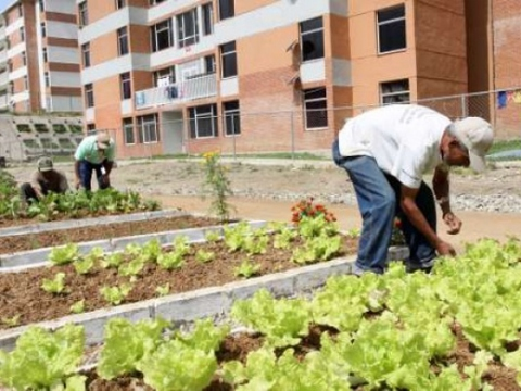 Urban agriculture in Caracas (Patriagrande)