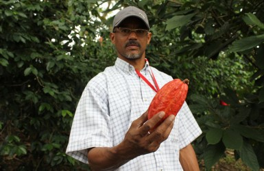 A grower holds a cocoa pod on a community owned plantation in Venezuela.      