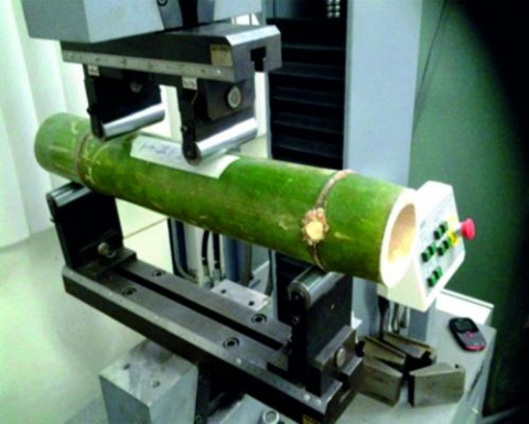 Venezuelan grown bamboo is being experimented on to improve its strength and durability at the USB (Prensa Fonacit)