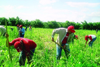 Venezuelan farmers will benefit from the increased production network, Maduro said. (archives)