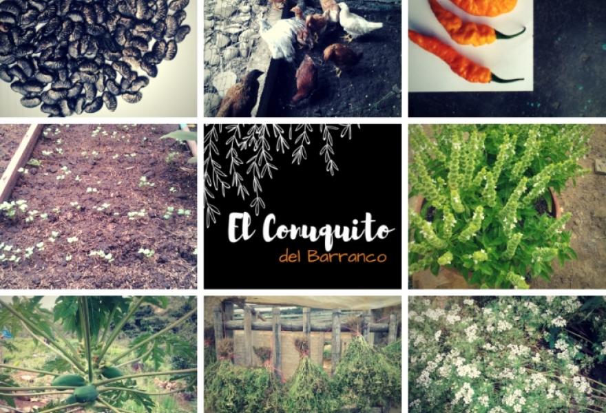 El Conuquito del Barranco in Lara State looks to produce, save and distribute seeds. (Conuquito del Barranco)