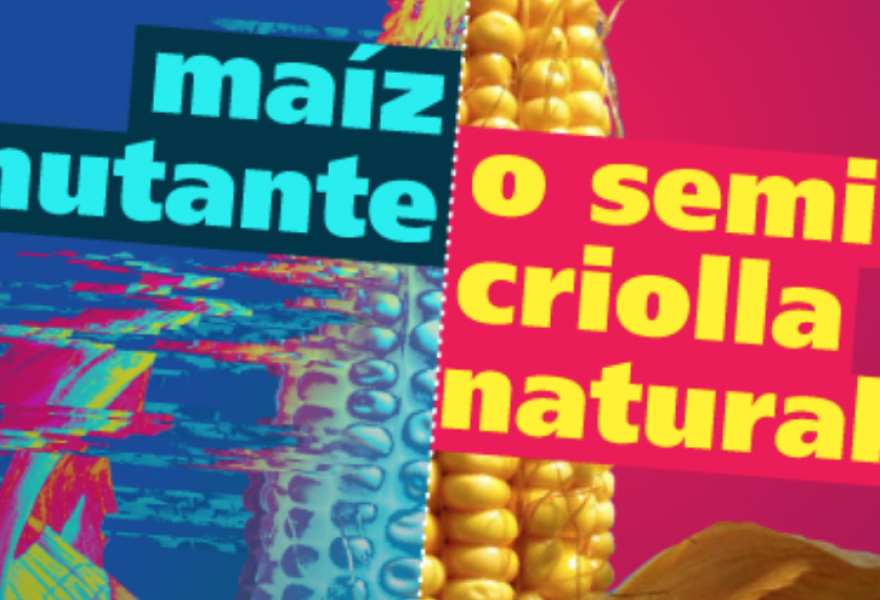 """Mutant corn or natural Venezuelan corn. For the Law of Anti-Transgenetic and Anti-Patented Seeds. In defense of biodiversity and campesino production October 6th. #Every Chavista Counts>"""